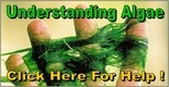 Pond Algae Solutions Rochester NY By Acorn Ponds & Waterfalls. Image