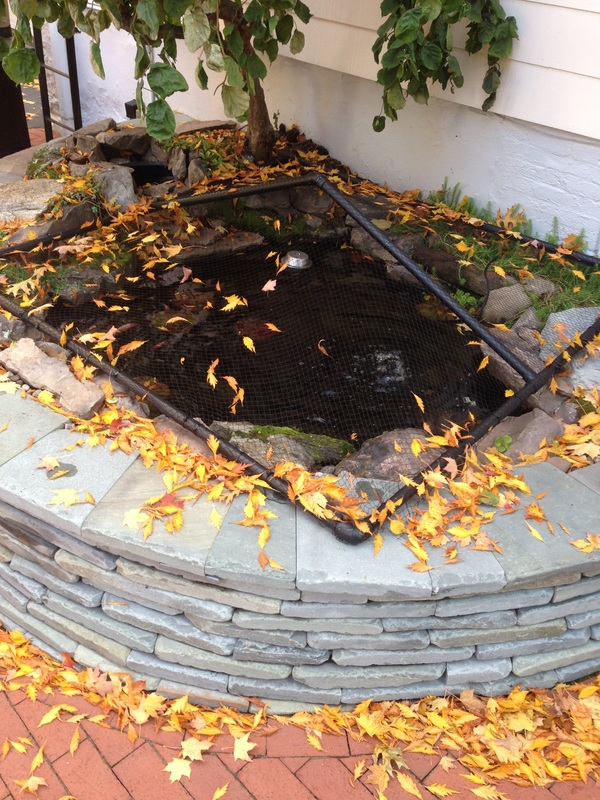 Fall pond maintenance & tenting/netting in Rochester New York (NY) by certified pond contractors of New York