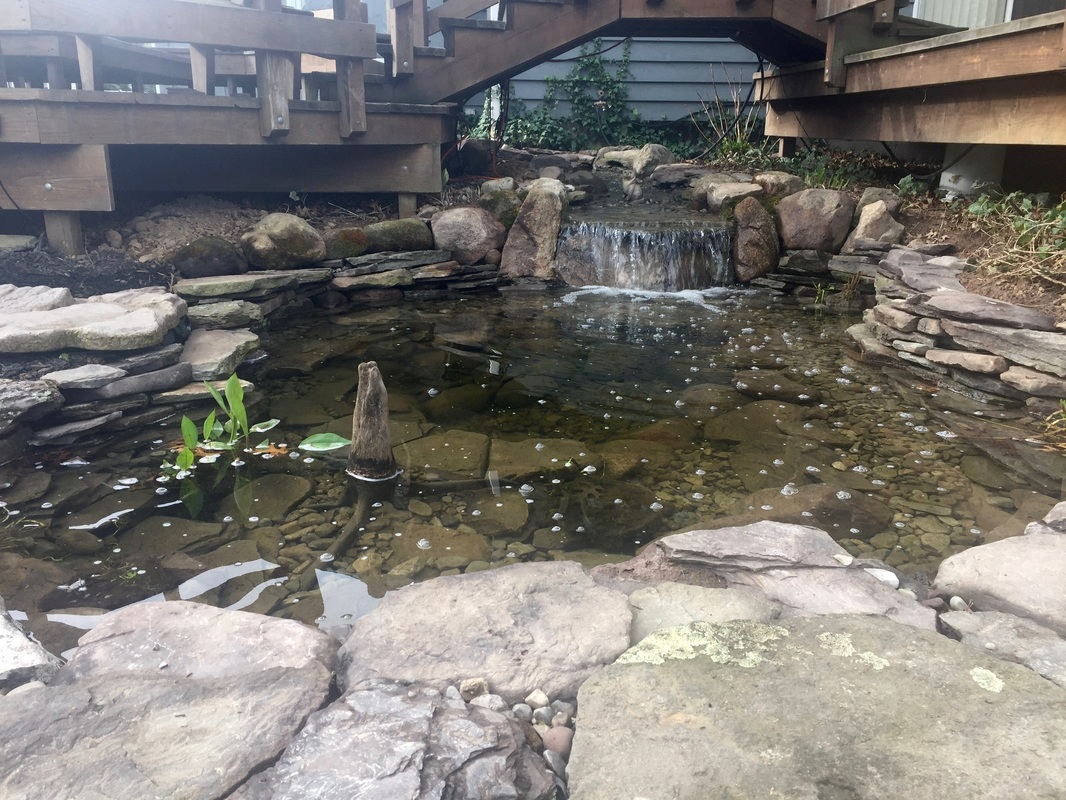 Waterfall Pond & Waterfall Renovation Service In Rochester NY By Acorn