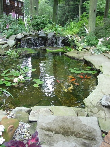 Picture: Koi Pond Maintenance Services, Brighton & Pittsford, Monroe County NY By Acorn Ponds & Waterfalls