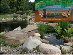 Constructed wetlands are by far the best filtration for any koi fish pond in Rochester New York (NY) By Acorn Ponds & Waterfalls