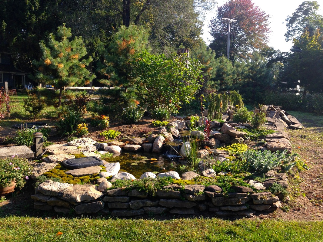 Pond Installation in Penfield, Monroe County NY