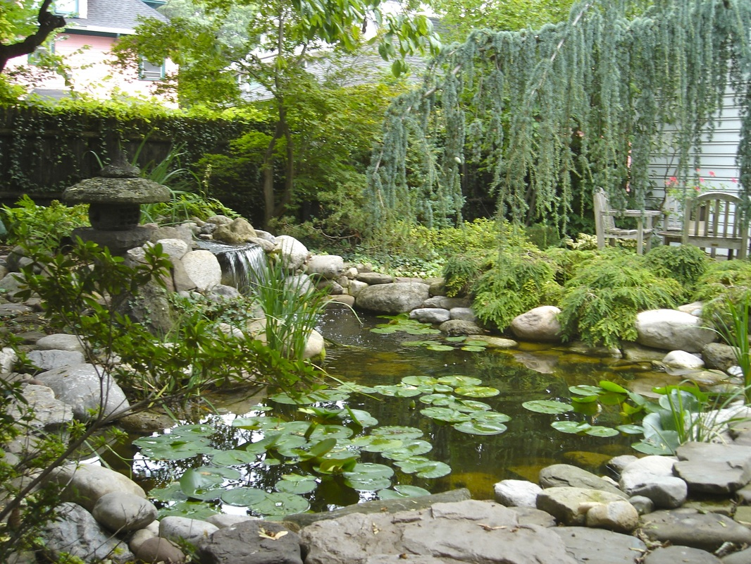 Pond Renovation & Reconstruction Services In Rochester New York (NY) - Acorn Ponds & Waterfalls.