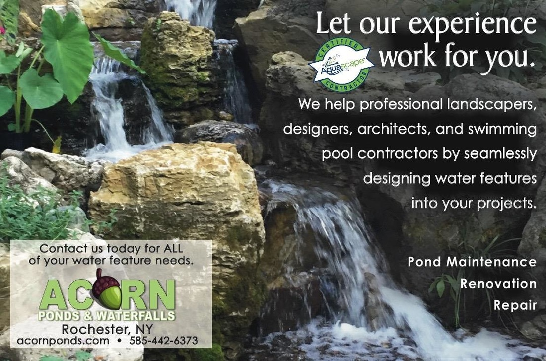 Pond contractor consultant company for landscapers, architects & homeowners in Rochester New York (NY) - Acorn Ponds & Waterfalls