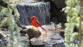 Birds, Backyard Ponds and Water Gardens In Rochester NY By Acorn Ponds & Waterfalls. Image