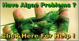 Pond Algae Solutions In Rochester, Monroe County, NY By Acorn Ponds & Waterfalls. Image