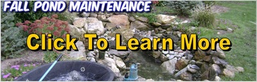 Fall Pond Maintenance Brighton, Pittsford & Henrietta, Monroe County NY