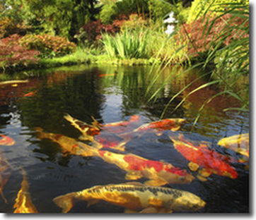 Picture: Backyard Pond Services In Chili & Greece, Monroe County NY By Acorn Ponds & Waterfalls