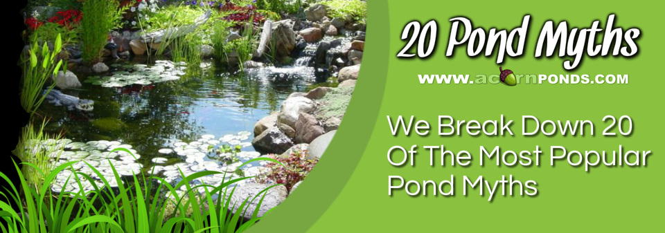Pittsford, Penfield, Brighton, Fairport & Rochester (NY) Pond Myths - Learn the truth about koi ponds. Image