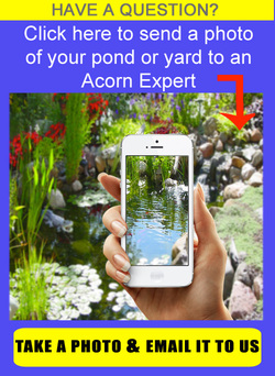 Acorn Ponds & Waterfalls are certified pond contractors specializing in designing, maintaining & installing water features & outdoor rooms in the landscape.