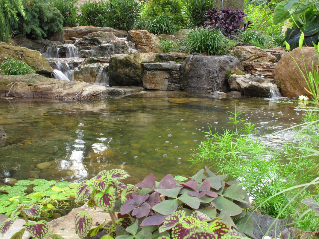 Picture: Pond Algae Control Ideas in Pittsford & Brighton, Monroe County NY By Acorn Ponds & Waterfalls