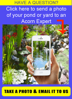 SEND US YOUR PHOTOS OF YOUR YARD OR POND For Backyard Pond Design & Installation In Rochester (NY) By Acorn Ponds & Waterfalls. Image
