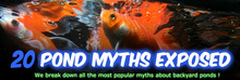 Pond Myths ideas rochester NY