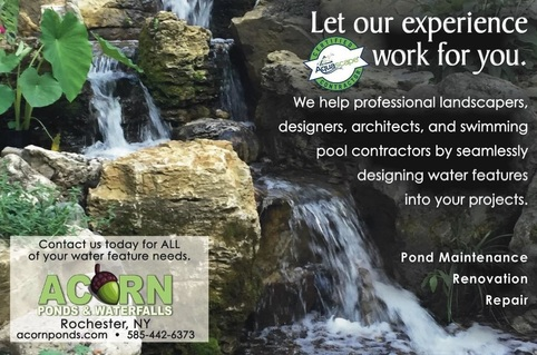 Certified aquascape contractors & pond service in Rochester New York (NY) By Acorn Ponds & Waterfalls