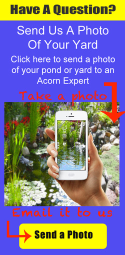 Pond Maintenance FAQs, Help & Advice In Rochester, Pittsford, Penfield, Brighton, Fairport (NY) By Acorn Ponds & Waterfalls (Certified Pond Contractors). Contact us now for help 585.442.6373