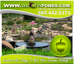 Waterfall Fish Pond Installation Services By Acorn Ponds & Waterfalls In Rochester New York (NY) 585.442.6373