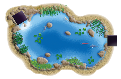 Aquatic Pond Plants Water Plants Information Amp Advice
