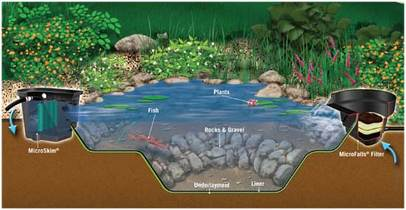 Pond Contractor, Fish Pond Filtration In Henrietta NY - Acorn Ponds & Waterfalls
