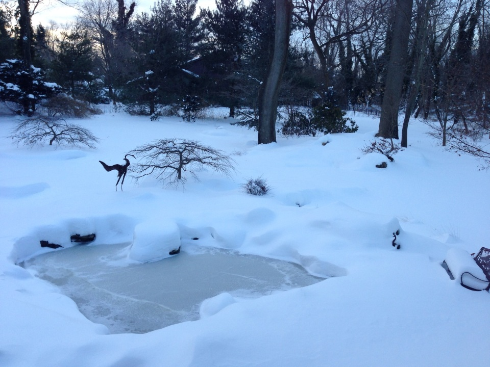 Winter Pond Fish Preparation In Pond Installation Services NY -  Acorn Ponds & Waterfalls