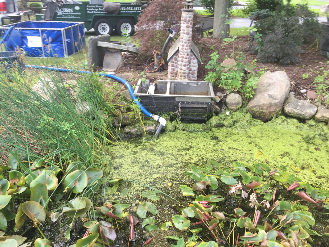 Use Acorn Ponds & Waterfalls to Maintain and Clean your Pond or Water Feature in Rochester NY.