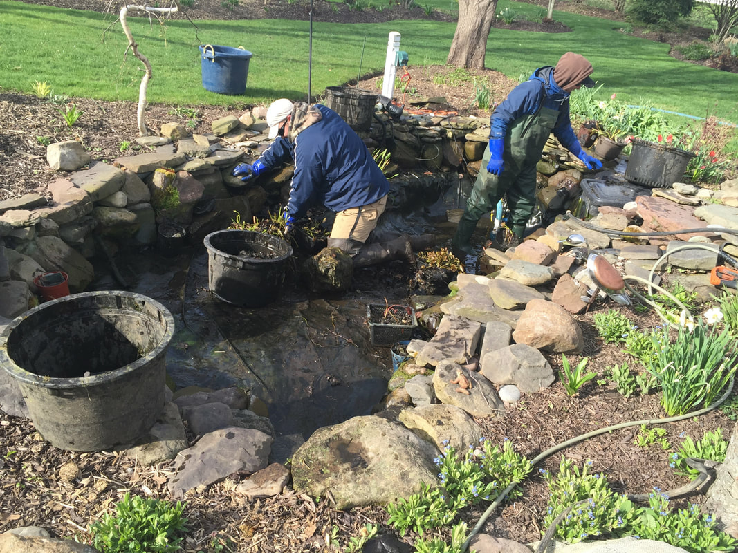 Are you looking to clean your fish pond in Rochester NY?
