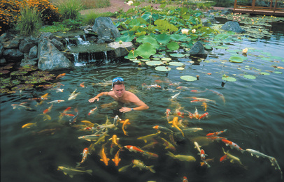 Koi Pond Contractor In Irondequoit NY - Acorn Ponds & Waterfalls