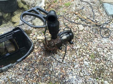 What do I need to check on my pond pump in Rochester NY?