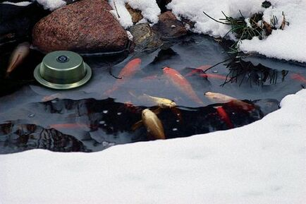 What Do My Pond Fish Do During The Winter Time In Rochester NY?