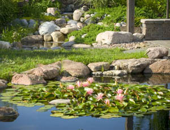 Summer Fish Pond Maintenance Rochester NY (New York) By Acorn Ponds & Waterfalls