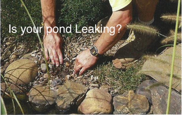 Pond Repair & Leak Detection In Rochester NY