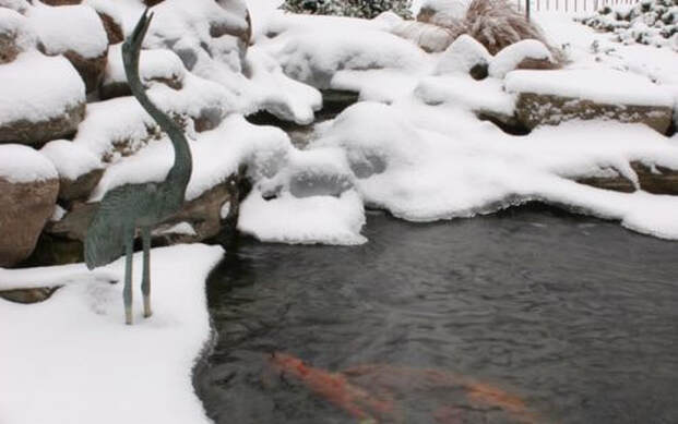 Are My Pond Fish Safe During The Winter In Rochester NY?
