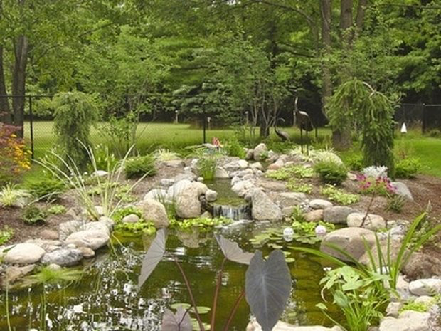 Get Ideas For Designing Backyard Fish Ponds In Rochester (NY) Or Near You