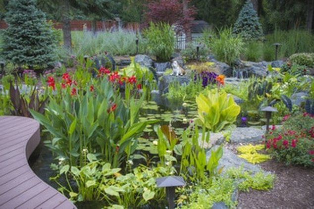 What kind of plants should I put in my backyard fish pond in Rochester NY or near me?