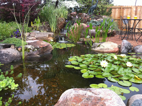 Koi pond design ideas in Rochester NY or near me