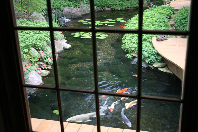 Enjoy Your Koi Pond Fish In Rochester New York (NY) or Near You