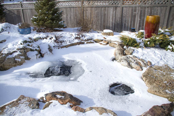 Prevent Winter Fish Loss In Rochester NY
