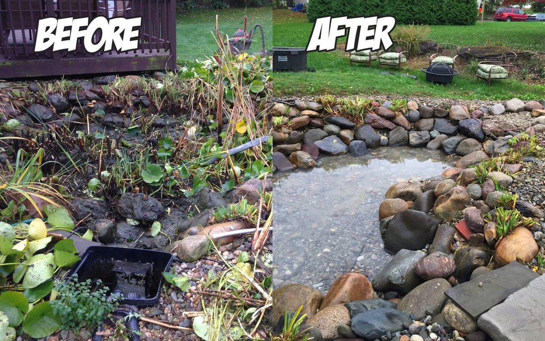 Fight Algae With Pond Maintenance by Acorn Ponds & Waterfalls of Rochester NY