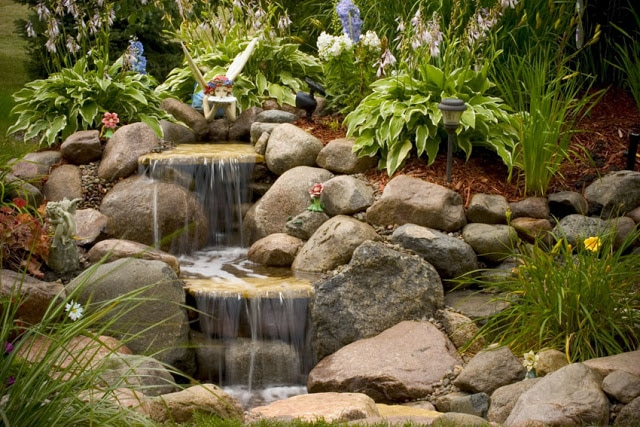Plants for waterfalls & ponds in Rochester NY